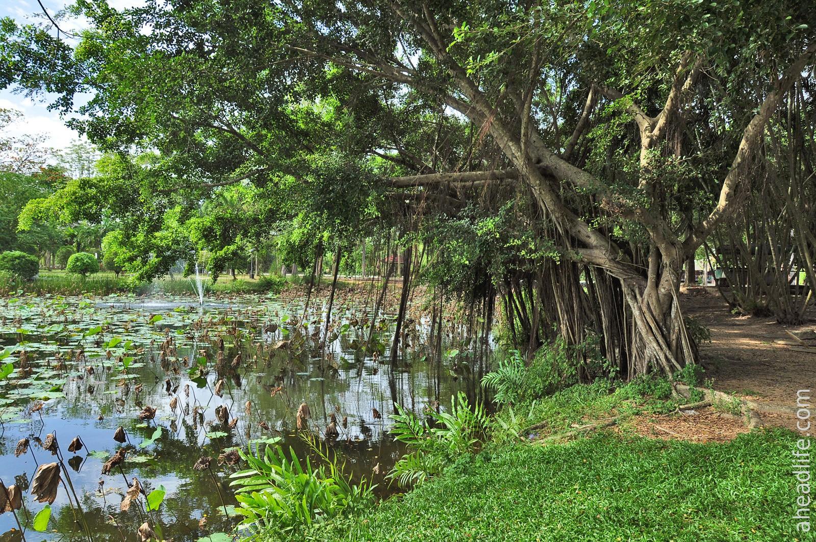 Городской парк в Сураттхани